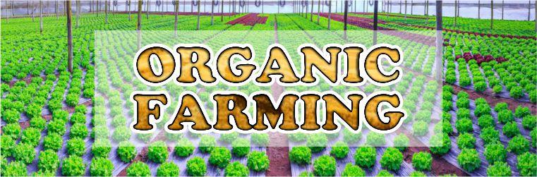 About Organic Farming India 2019 pendulumias